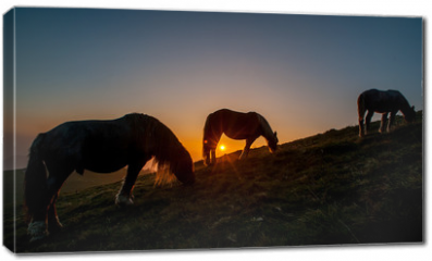 Obraz na płótnie canvas - horse grazing in the mountains at sunset