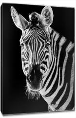 Obraz na płótnie canvas - Zebra Closeup II