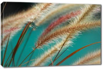 Obraz na płótnie canvas - fuzzy fountain grass