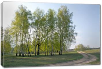Obraz na płótnie canvas - Spring birch forest and road