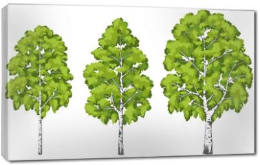 Obraz na płótnie canvas - Birch tree. A set of images.