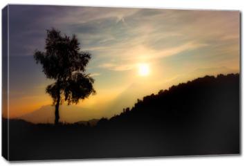 Obraz na płótnie canvas - Silhouette of birch plant on the alps at sunset