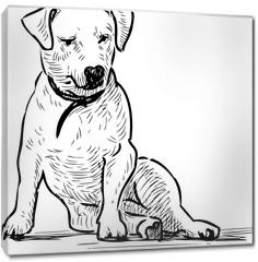 Obraz na płótnie canvas - Sketch of a sitting lap dog