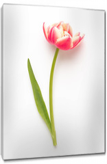 Obraz na płótnie canvas - Spring flowers, tulips on pastel colors background. Retro vintage style.