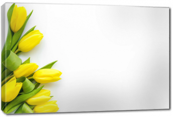 Obraz na płótnie canvas - Spring composition. Delicate yellow tulips on white background top view space for text border