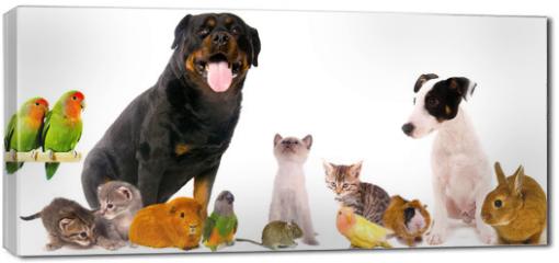 Obraz na płótnie canvas - montage animaux
