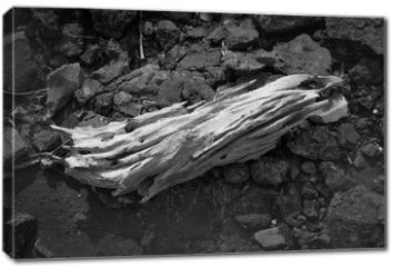 Obraz na płótnie canvas - old log