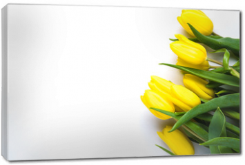 Obraz na płótnie canvas - Yellow tulips on white background. The concept of spring or women's day