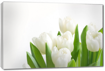 Obraz na płótnie canvas - Bouquet of white tulip on white. Floral pattern. Space for text.