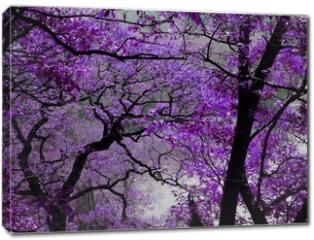 Obraz na płótnie canvas - purple spring