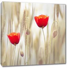 Obraz na płótnie canvas - Poppies