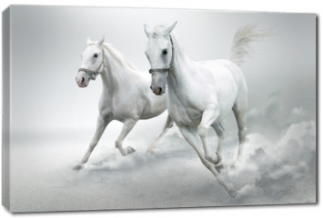 Obraz na płótnie canvas - White horses