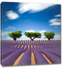 Obraz na płótnie canvas - Lavande Provence France / lavender field in Provence, France