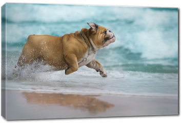 Obraz na płótnie canvas - Happy dog Bulldog running at the sea