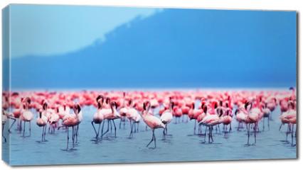 Obraz na płótnie canvas - African flamingos