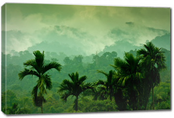 Obraz na płótnie canvas - Selva de Sumatra