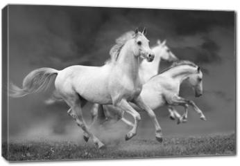 Obraz na płótnie canvas - horses run