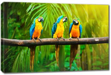 Obraz na płótnie canvas - Blue-and-Yellow Macaw