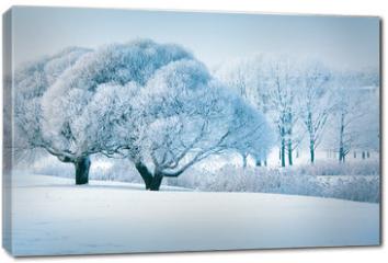Obraz na płótnie canvas - Winter trees
