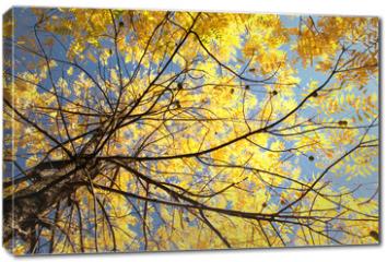 Obraz na płótnie canvas - Autumn tree