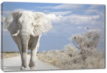 Obraz na płótnie canvas - elephant road