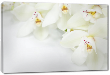 Obraz na płótnie canvas - Orchid Flowers