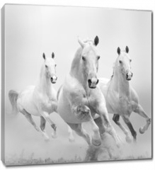 Obraz na płótnie canvas - white horses in dust