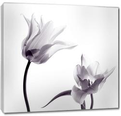 Obraz na płótnie canvas - tulip  silhouettes on white