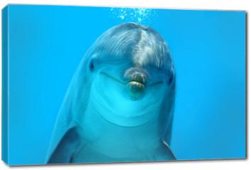 Obraz na płótnie canvas - Dolphin Look