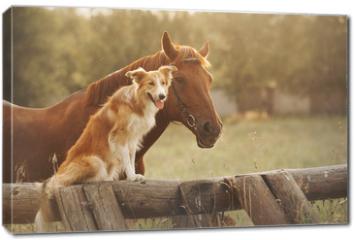 Obraz na płótnie canvas - Red border collie dog and horse