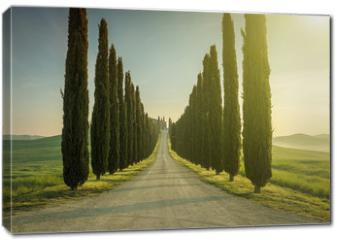 Obraz na płótnie canvas - Tuscany, Landscape. Italy
