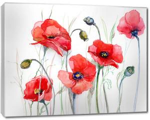 Obraz na płótnie canvas - poppy