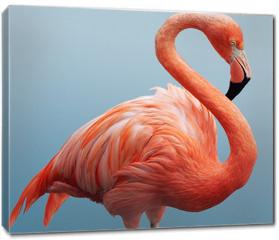 Obraz na płótnie canvas - flamingo