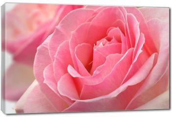 Obraz na płótnie canvas - Kwiat róży