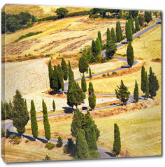 Obraz na płótnie canvas - Cypress tree scenic road in Monticchiello, Tuscany, Italy.