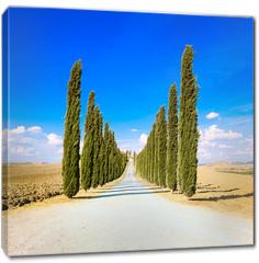 Obraz na płótnie canvas - Tuscany, Cypress Trees white road rural landscape, Italy, Europe