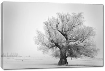 Obraz na płótnie canvas - Beautiful tree in winter time in February 2014, Romania