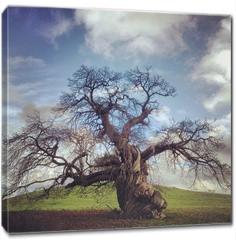 Obraz na płótnie canvas - skeletal tree without leaves in autumn