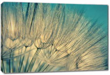 Obraz na płótnie canvas - Blue abstract dandelion flower background