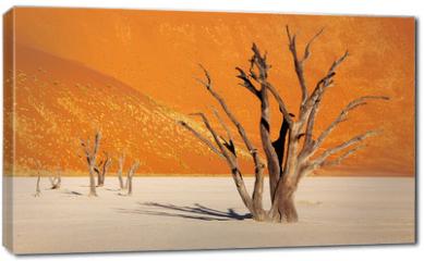 Obraz na płótnie canvas - Dead tree in Dead Vlei - Sossusvlei, Namib Desert, Namibia