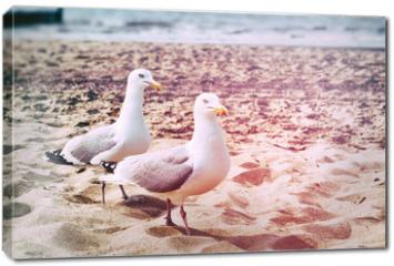 Obraz na płótnie canvas - Seagulls on the beach