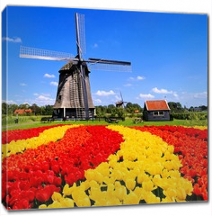 Obraz na płótnie canvas - Vibrant tulips with windmill, Netherlands