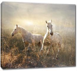 Obraz na płótnie canvas - white horse galloping on meadow