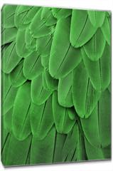 Obraz na płótnie canvas - Green Feathers
