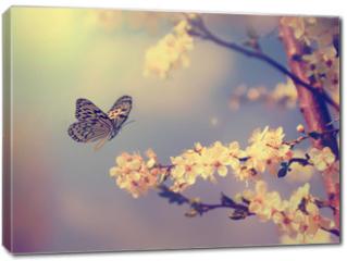Obraz na płótnie canvas - Butterfly and cherry blossom