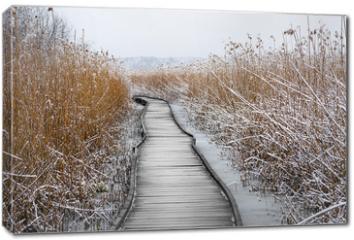 Obraz na płótnie canvas - Boardwalk with frozen reeds