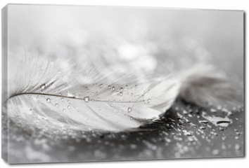 Obraz na płótnie canvas - White feather with water drops