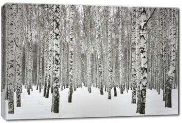 Obraz na płótnie canvas - Winter birch forest