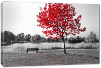 Obraz na płótnie canvas - Red Tree Over Park Bench
