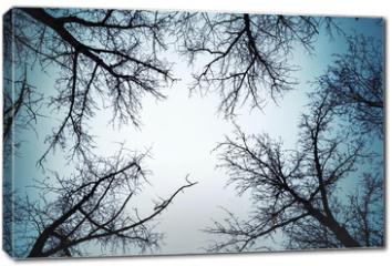 Obraz na płótnie canvas - Black leafless trees silhouettes over dark sky